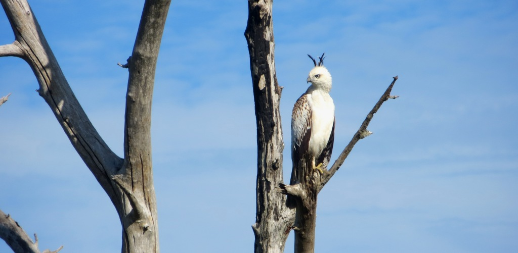 adler-eagle-sri-lanka-safari-udawalawe